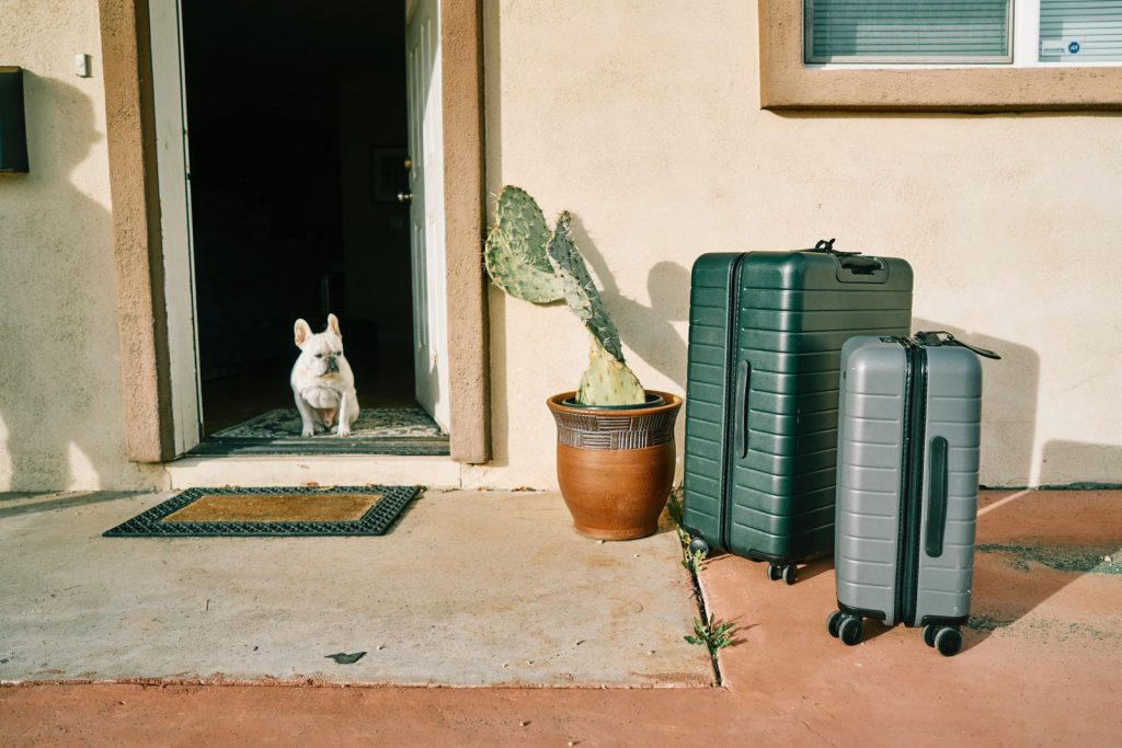 Pet dog patiently waiting beside luggage before vacation